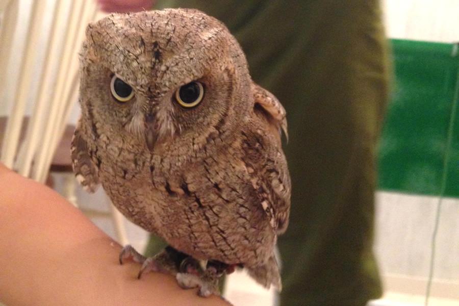 owl07