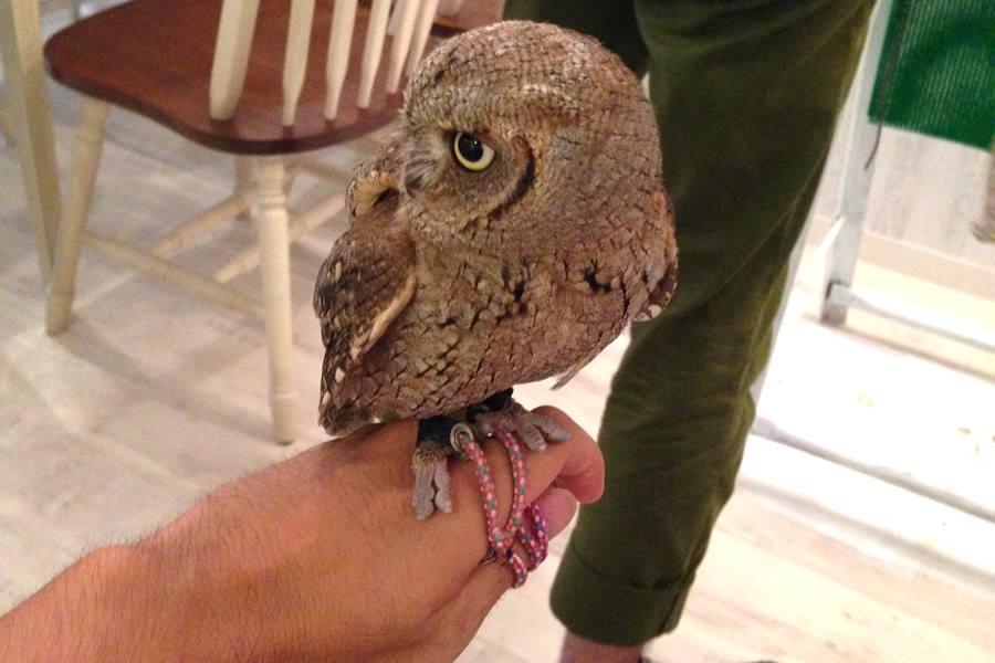 owl08