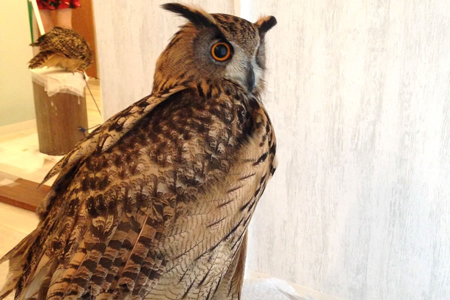 owl16