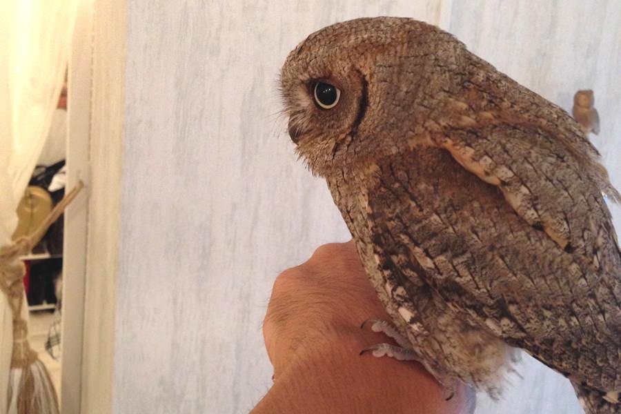 owl17